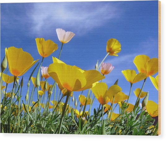 Poppies And Blue Arizona Sky Wood Print