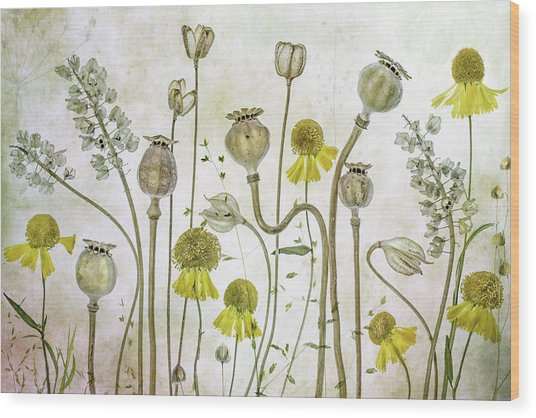 Poppies And Helenium Wood Print