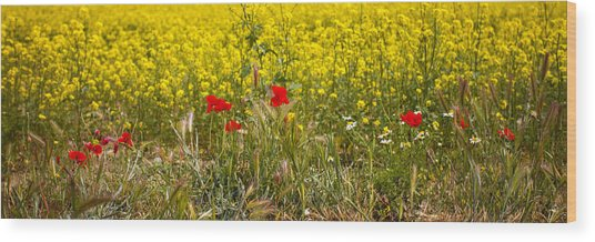 Poppies In Yellow Field Wood Print