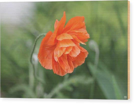Poppy 2 Wood Print