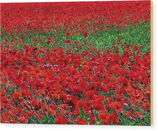 Poppy Field Wood Print by Jacqueline M Lewis
