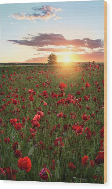 Poppy Fields Of Sweden Wood Print by Christian Lindsten