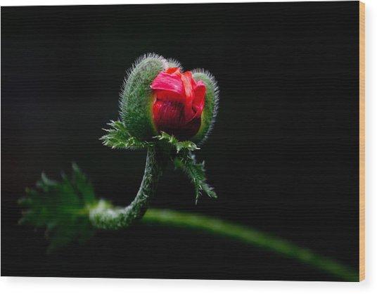 Poppy Flower Wood Print by Mikhail Pankov