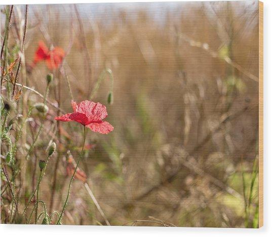 Poppy. Wood Print