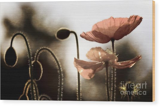 Poppy Generations Wood Print