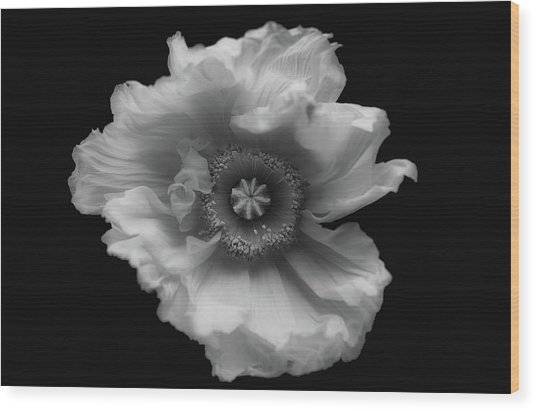 Poppy In Mono Wood Print by Lotte Gr??nkj??r