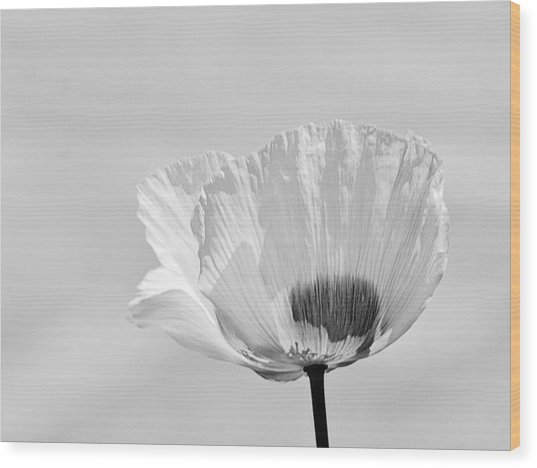Poppy In White Wood Print