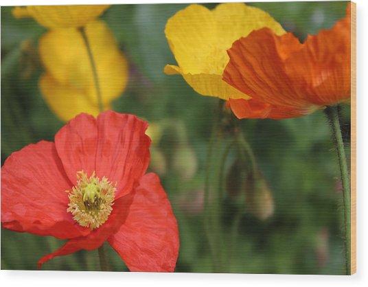Poppy Iv Wood Print