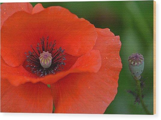 Poppy Wood Print by Marjorie Tietjen
