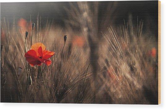 Poppy With Corn Wood Print by Nicodemo Quaglia