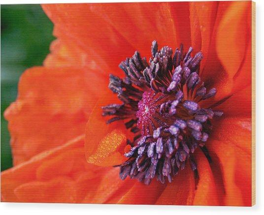 Poppy's Purple Passion Wood Print