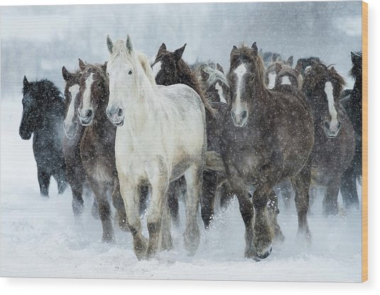 Populations Of Horses Wood Print by Makieni's Photo