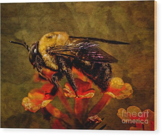 Portrait Of A Bee Wood Print
