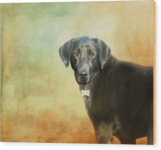 Portrait Of A Black Labrador Retriever Wood Print