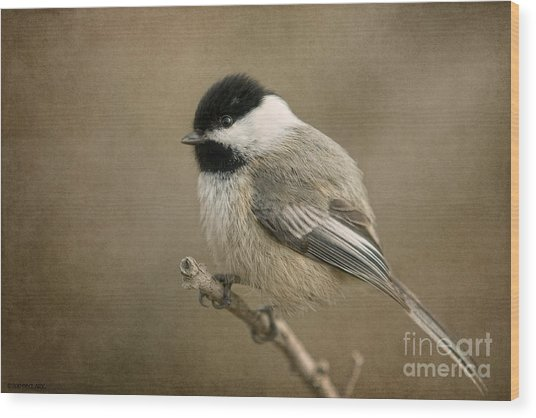 Portrait Of A Blackcapped Chickadee Wood Print