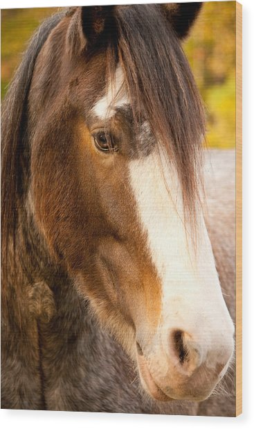 Portrait Of A Clydesdale Wood Print
