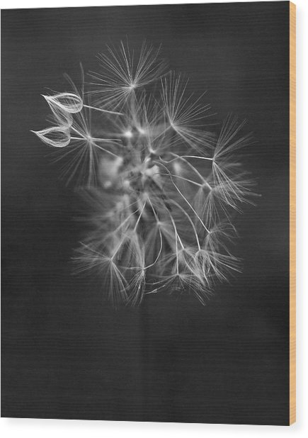 Portrait Of A Dandelion Wood Print