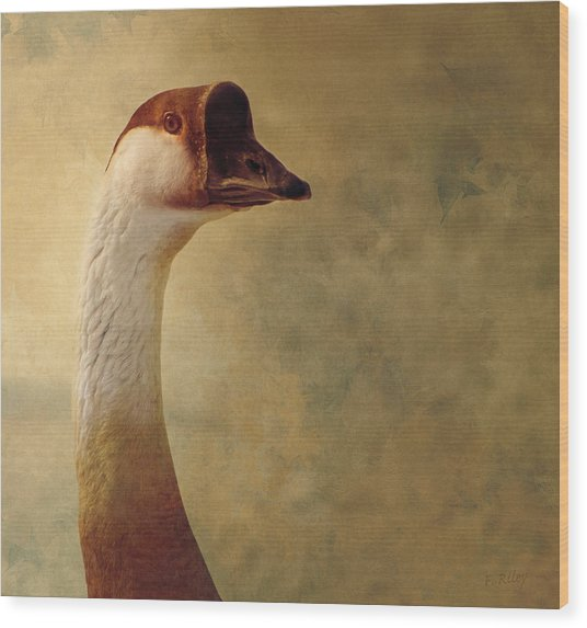 Portrait Of A Goose Wood Print