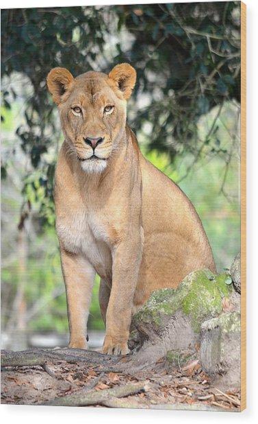 Portrait Of A Proud Lioness Wood Print