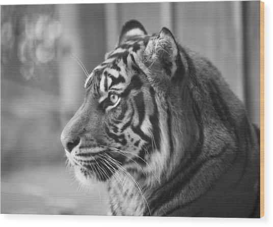 Portrait Of A Sumatran Tiger Wood Print