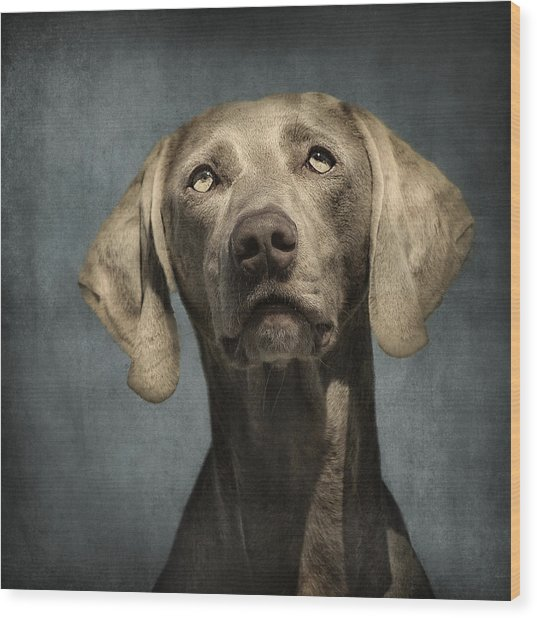 Portrait Of A Weimaraner Dog Wood Print