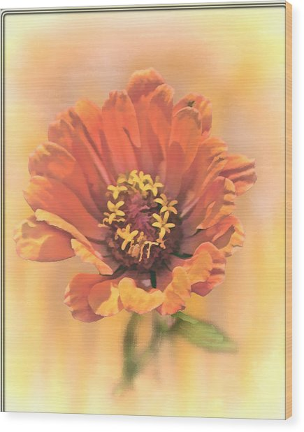 Portrait Of A Zinnia Wood Print