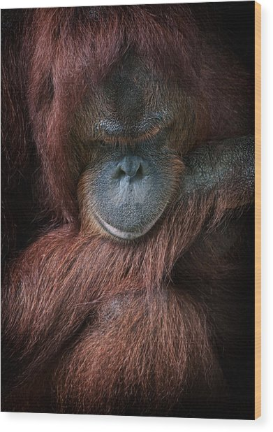 Portrait Of An Orangutan Wood Print by Zoe Ferrie