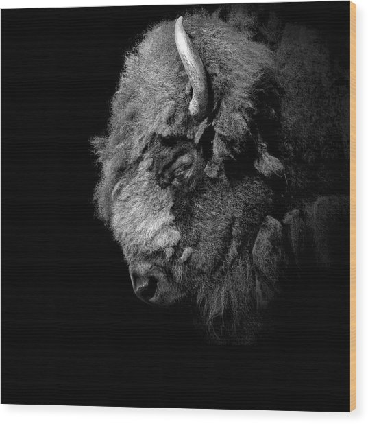 Portrait Of Buffalo In Black And White Wood Print