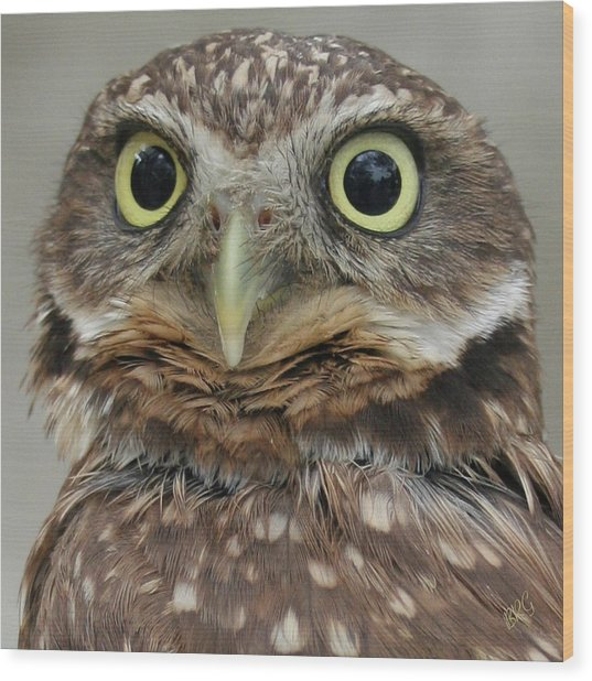 Portrait Of Burrowing Owl Wood Print