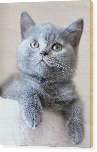 Portrait Of Cute Cat Wood Print by Ozcan Malkocer
