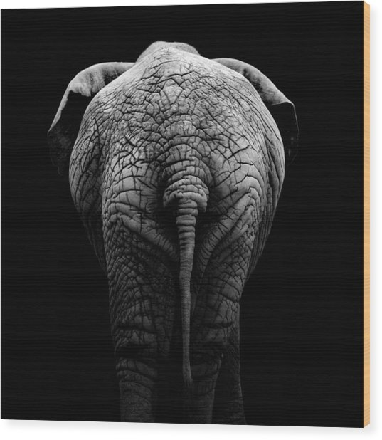 Portrait Of Elephant In Black And White II Wood Print