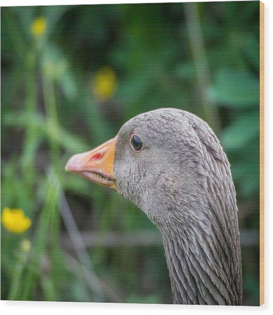 Portrait Of Greylag Goose, Iceland Wood Print