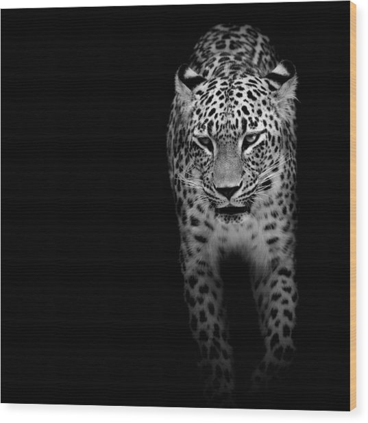 Portrait Of Leopard In Black And White II Wood Print