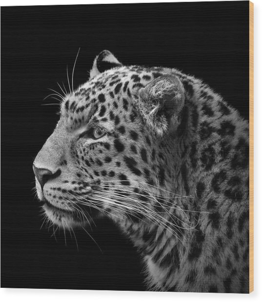 Portrait Of Leopard In Black And White IIi Wood Print