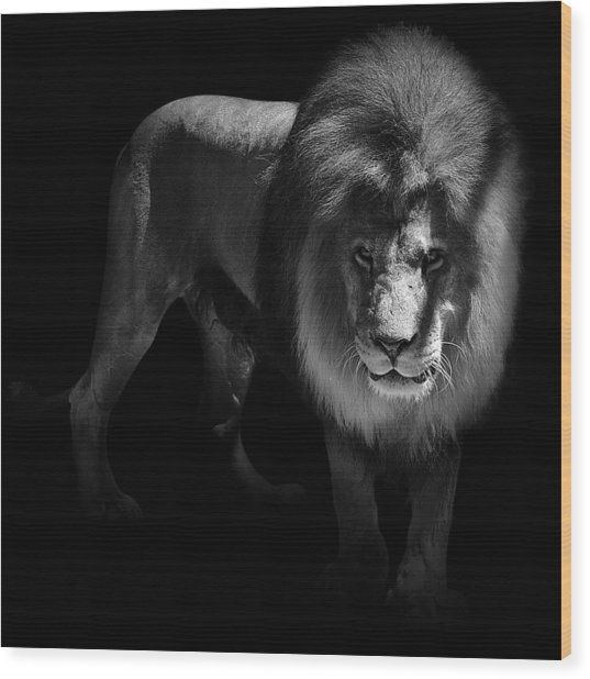 Portrait Of Lion In Black And White Wood Print