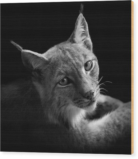 Portrait Of Lynx In Black And White II Wood Print