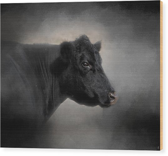 Portrait Of The Black Angus Wood Print