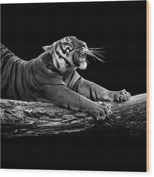 Portrait Of Tiger In Black And White Wood Print