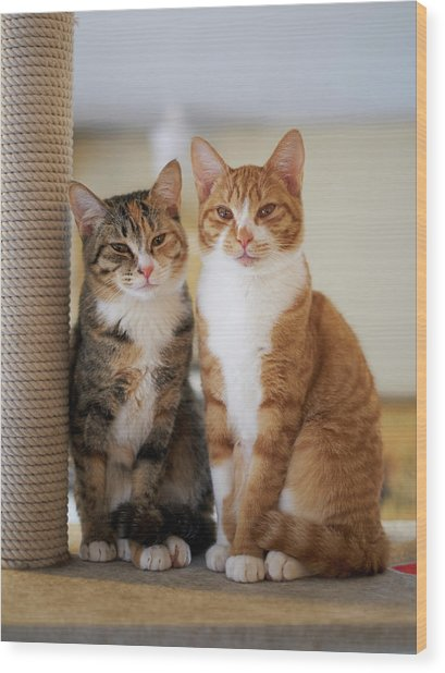 Portrait Of Two Young Cats Wood Print by Akimasa Harada