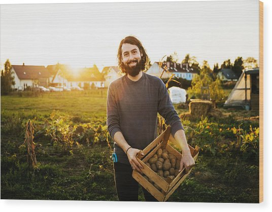 Portrait Of Urban Farmer Holding Crate Of Potatoes Wood Print by Tom Werner