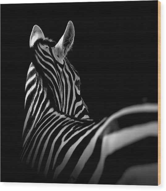 Portrait Of Zebra In Black And White II Wood Print