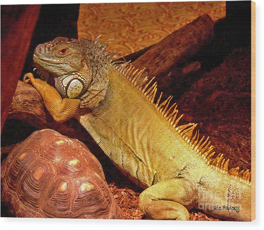 Posing Iguana And Friend Wood Print