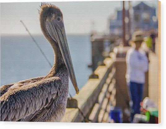 Posing Pelican Wood Print