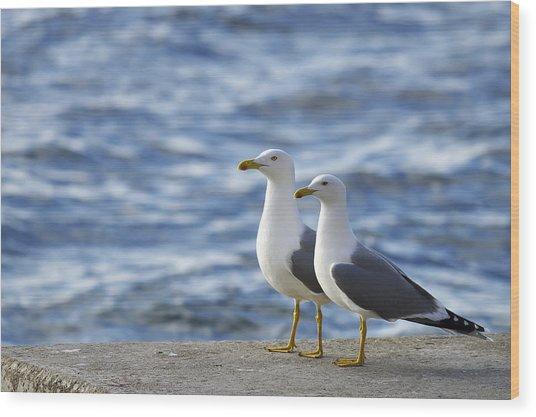 Posing Seagulls Wood Print