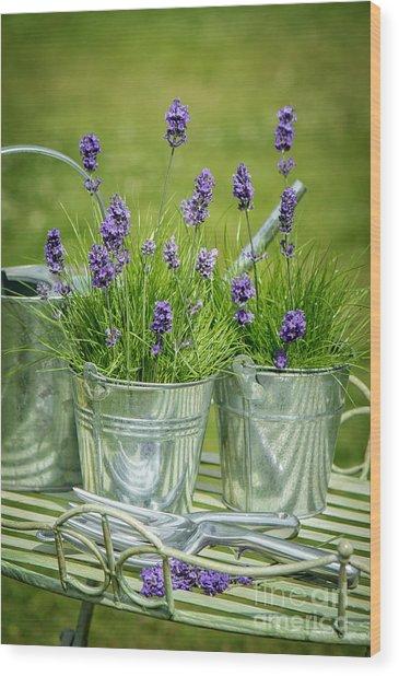 Pots Of Lavender Wood Print