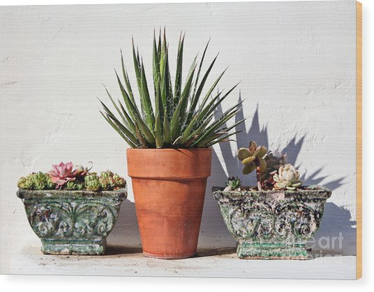 Potted Succulents Wood Print