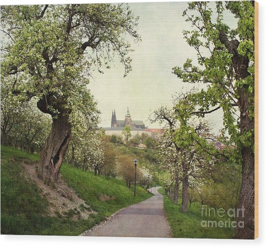 Prague In Bloom I Wood Print