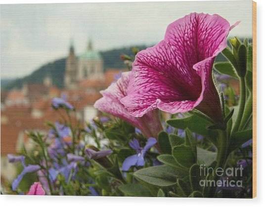 Prague In Bloom Vi - Summer Edition Wood Print