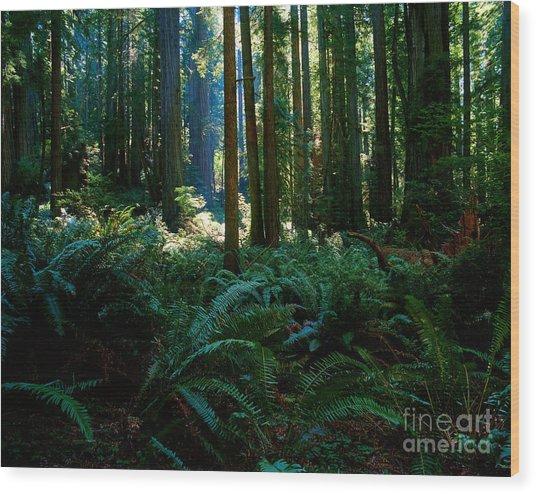 Prairie Creek Redwoods State Park 10 Wood Print
