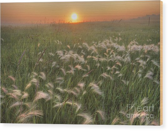 Prairie Foxtails Wood Print